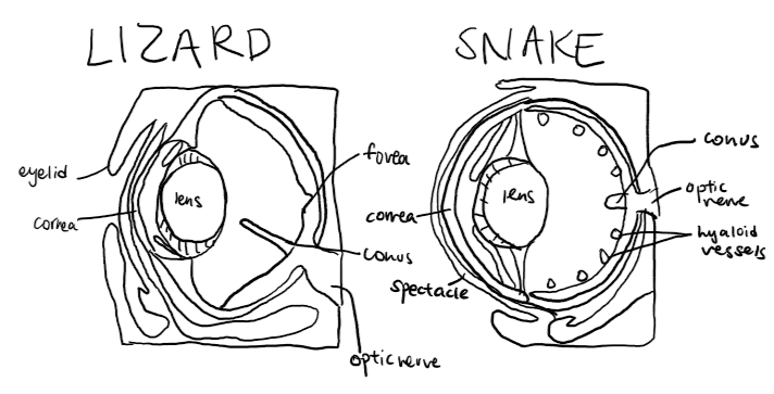 lizard snake eye